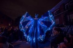 Papillum-nuit2